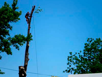 Tree Pruning Service in New Jersey