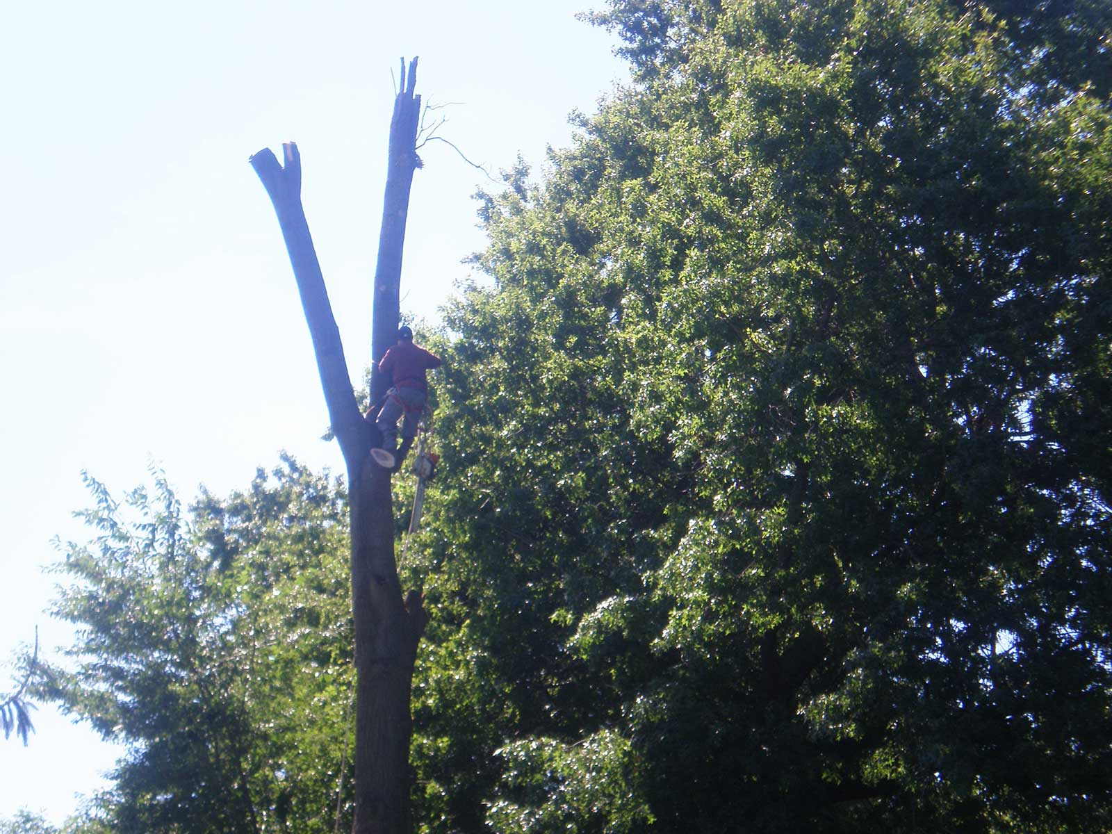 We are the best Tree Service